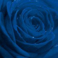 Belle Rose blue