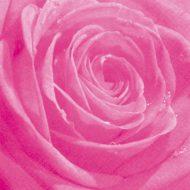 Belle Rose pink