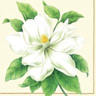 Botanic Magnolia