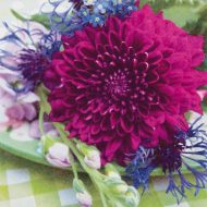 Dahlia & Cornflower
