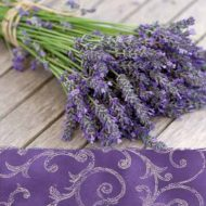 Lavander In The Country