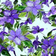 Flowering Clemantis Lilac