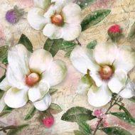 Trois Mangolias Blanc