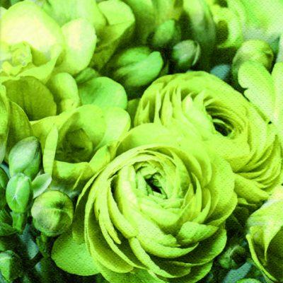 Freesia & Persian Buttercup Green