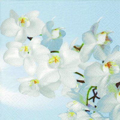 Orchidea Blanca Acqua