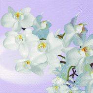 Orchidea Blanca Vintage Lavender