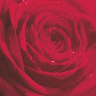 Belle Rose du Martin Red
